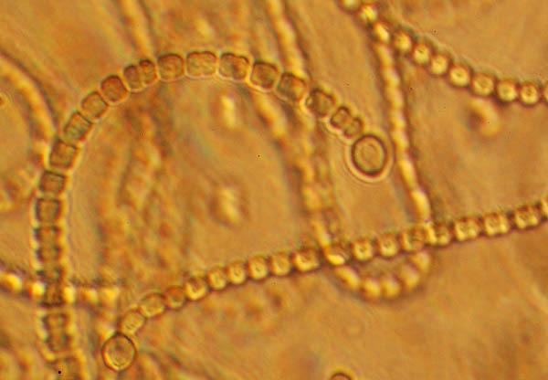 mikroskopowe cuda